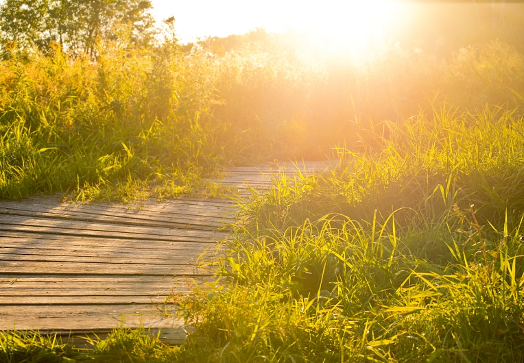Grass-and-Mer-Bleue-Bog-boardwalk---processed-2014