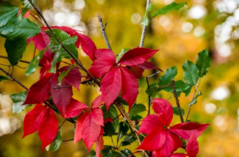Autumn-Mer-Bleue-Bog--d610-2014-00081-copy