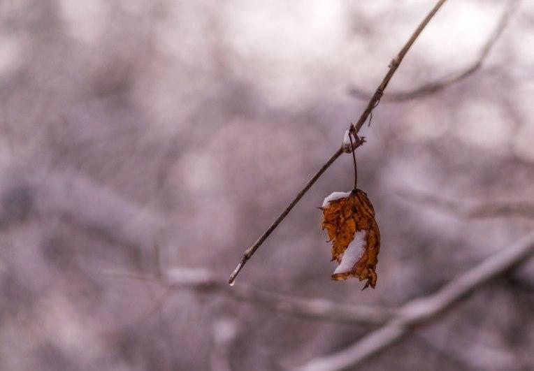 After-the-winter-storm--d610--jan-2014-00109-copy