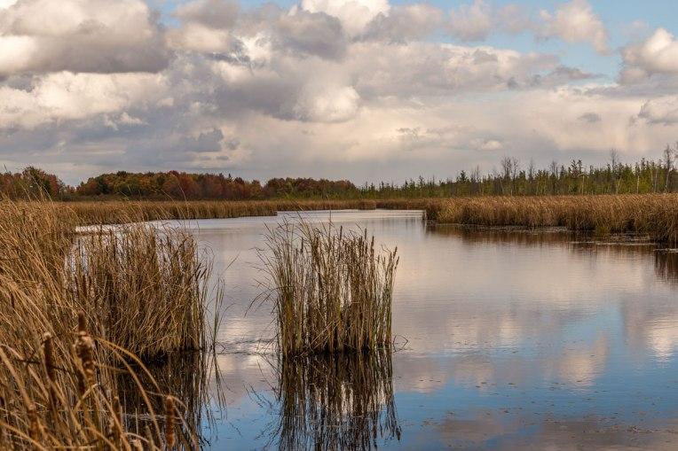 Autumn-Mer-Bleue-Bog--d610-2014-00175-copy