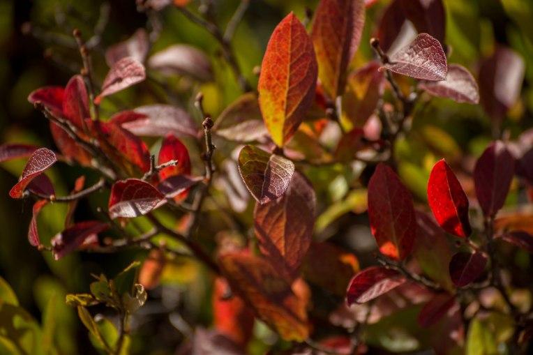 Autumn-Mer-Bleue-Bog--d610-2014-00202-copy