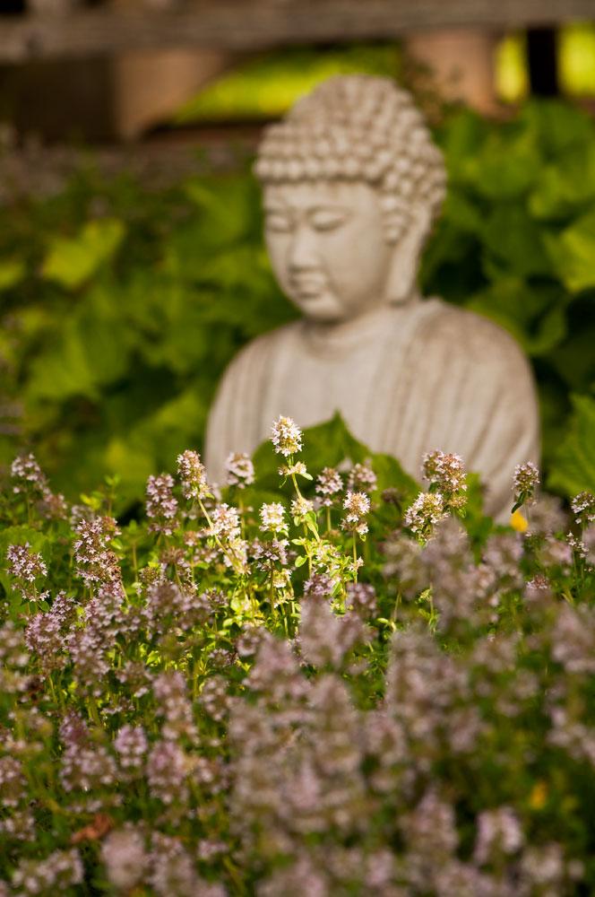 The-Herb-garden-2013-DSC_0808-copy